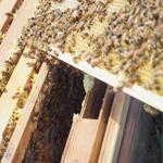 蜂蜜へのこだわり